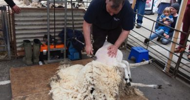 Shipston Wool Fair 2015