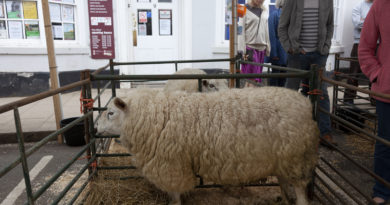 Shipston Wool Fair 2018
